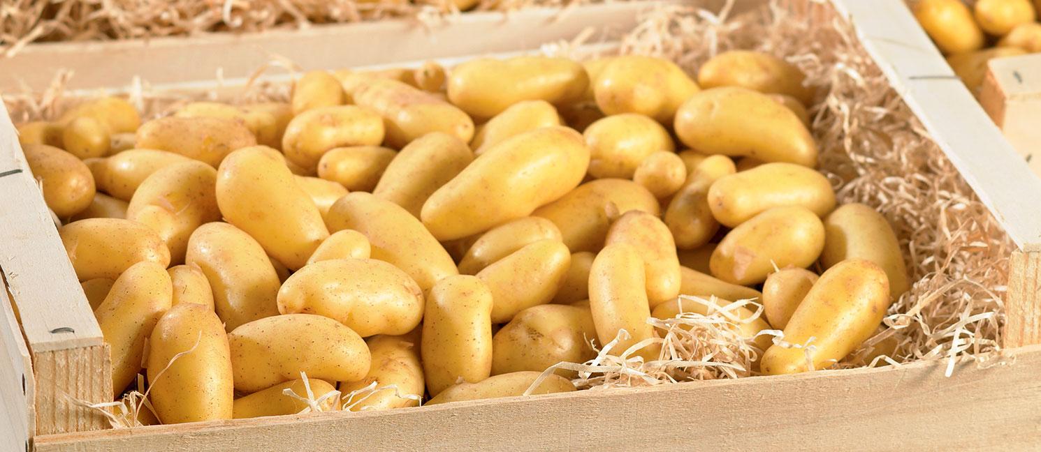 Pomme de terre delicatesse prix recettes et conservation grand frais - Pomme de terre conservation ...