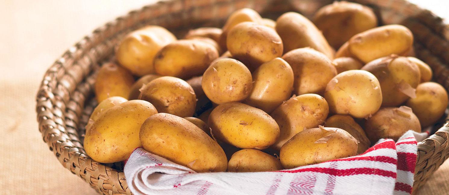 Pomme de terre primeur prix recettes et conservation grand frais - Pomme de terre conservation ...