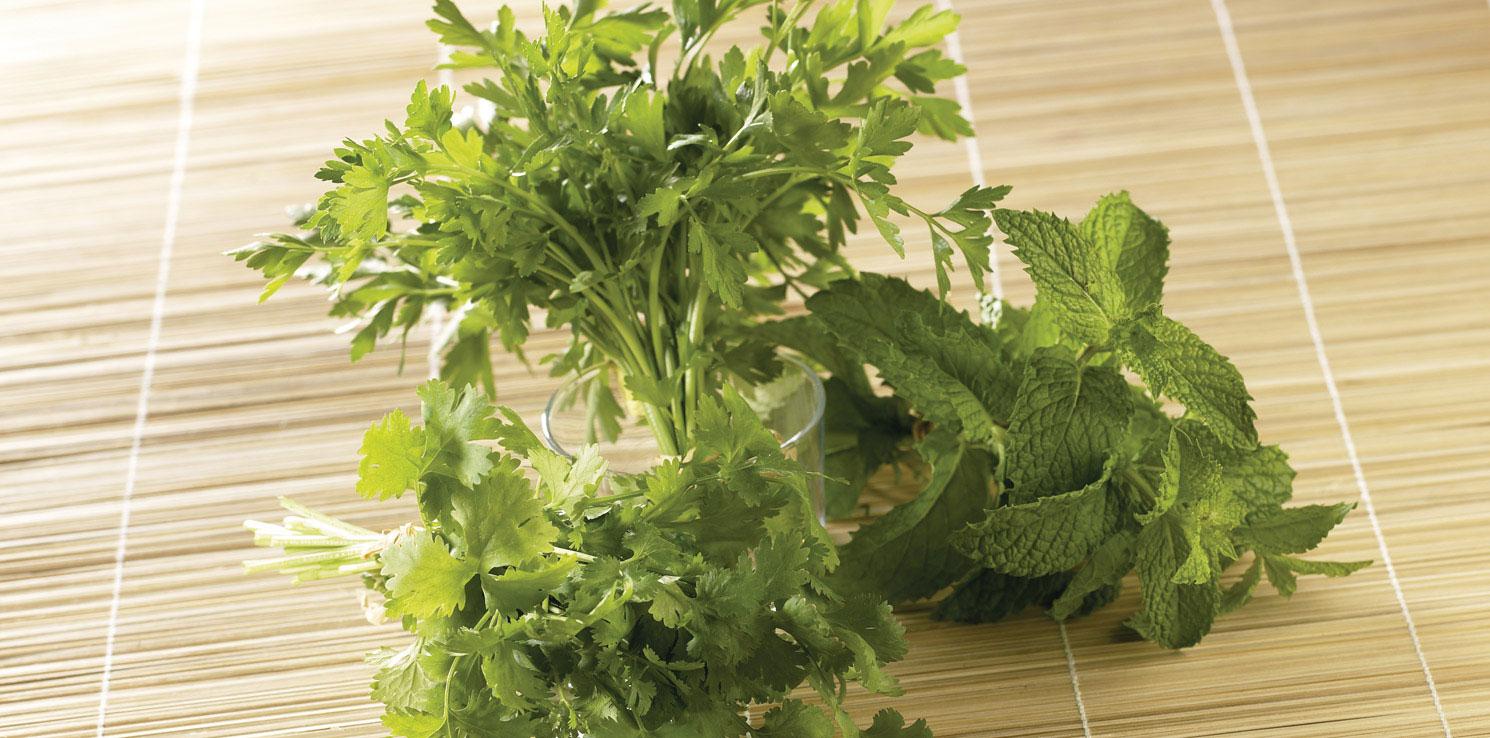 herbes aromatiques fra ches menthe basilic coriandre grand frais. Black Bedroom Furniture Sets. Home Design Ideas