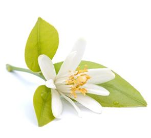fleur d'oranger: prix, recettes et conservation - grand frais
