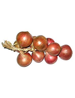 Oignon ros de roscoff prix recettes et conservation - Comment conserver les oignons ...