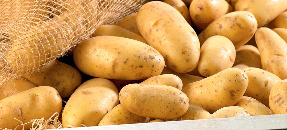 Pomme de terre juliette prix recettes et conservation grand frais - Pomme de terre conservation ...